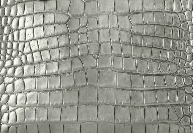Crocodile belly